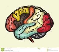 human-brain-lateral-view-vector-illustration-32620367